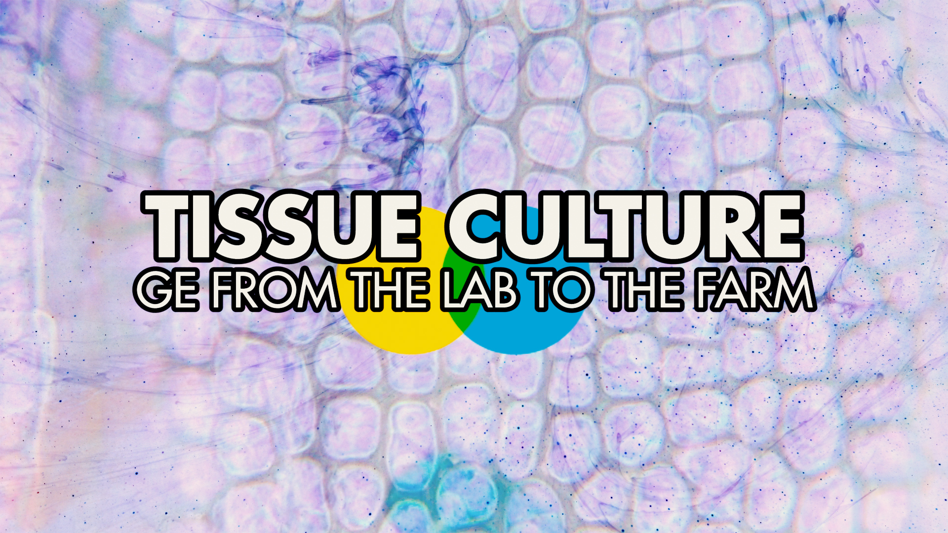 Tissue Culturing: GE From the Lab to the Field - Todayville