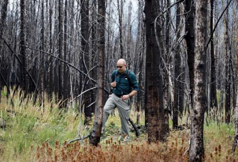 fire damaged trees at Waterton